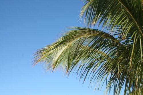 palm close james
