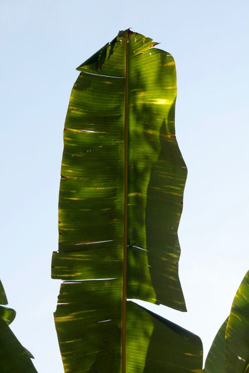 palm frond leaf