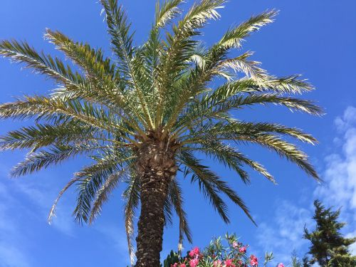 palm vegetation balearic islands
