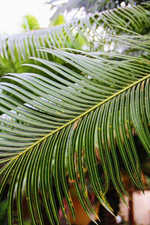 palm palm fronds south sea