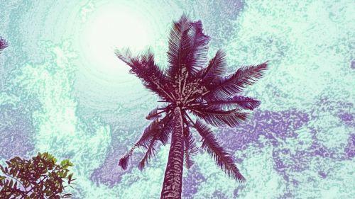 kokoso, kokoso & nbsp, medis, kokoso, delnas