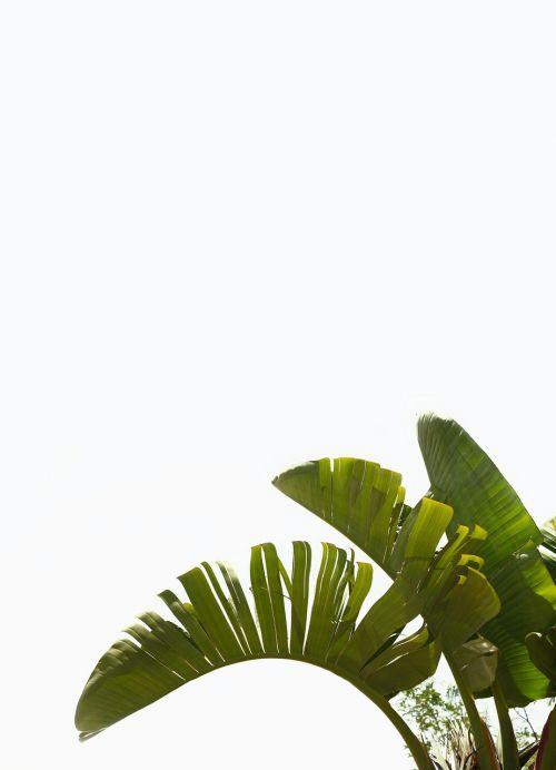 palm plant green