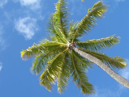 palm hawaii beach
