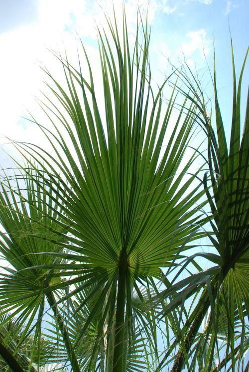 palm leaves sky