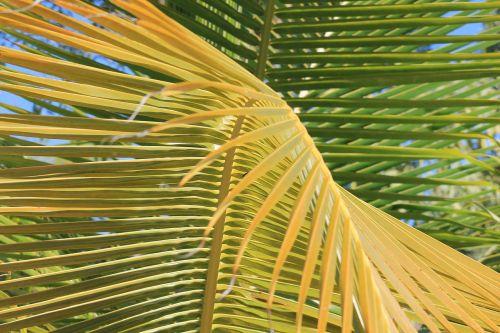 palm vacancy tropics