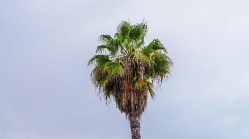 palm tropics tenerife