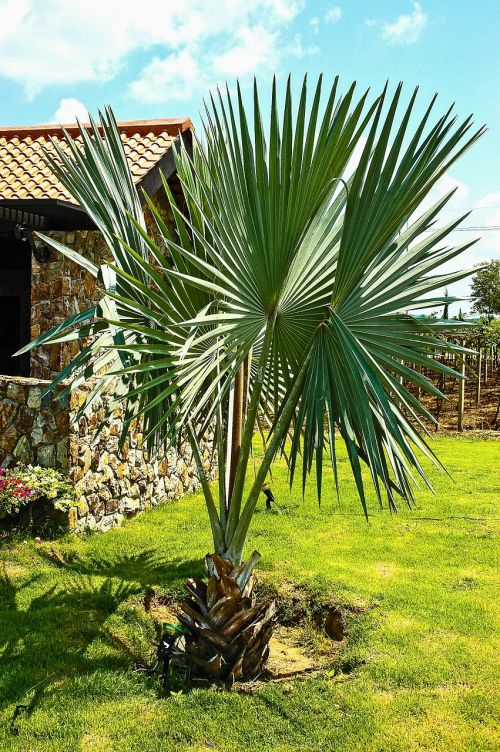 palm plant stone built house