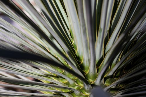 palm concentric rotated