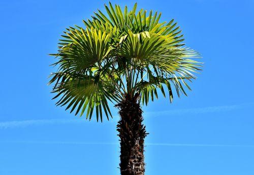 palm summer holidays