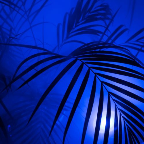 palm diffuse art