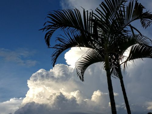palm climate change clouds