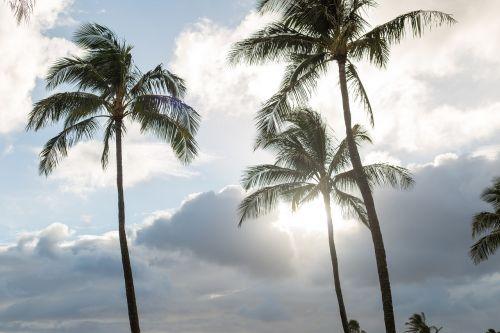 palm tropical beach