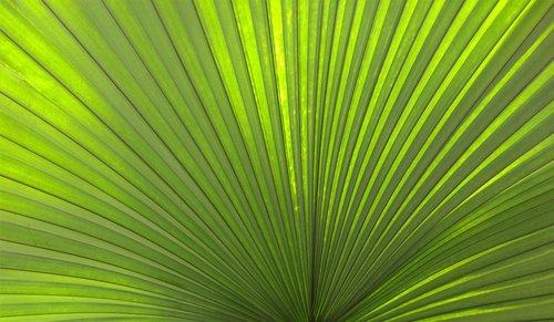 palm  leaf  tropical