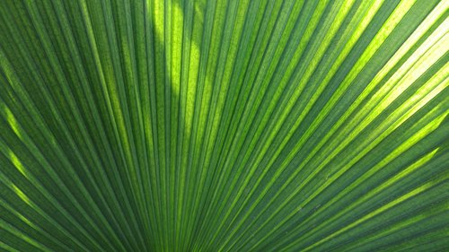 palm  tropical  green