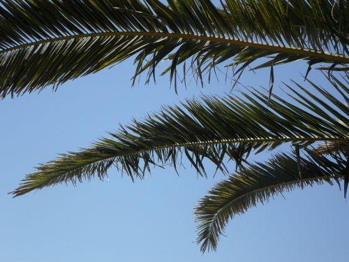palm sky palm leaves