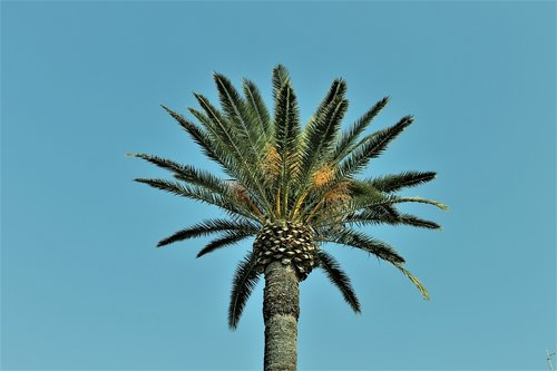 palm  nature  blue sky