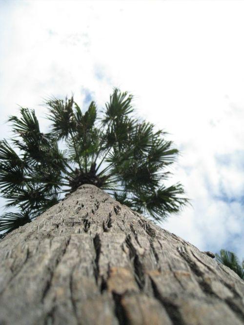 palm tribe log