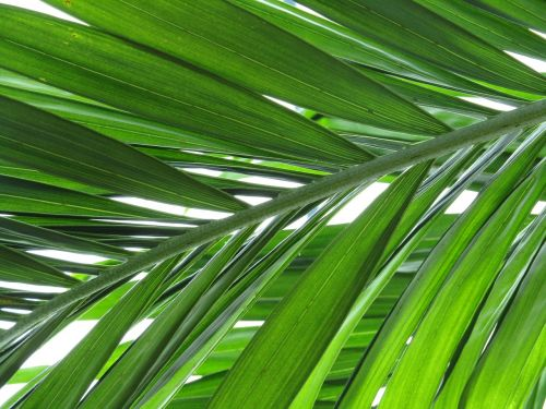 palm plant green