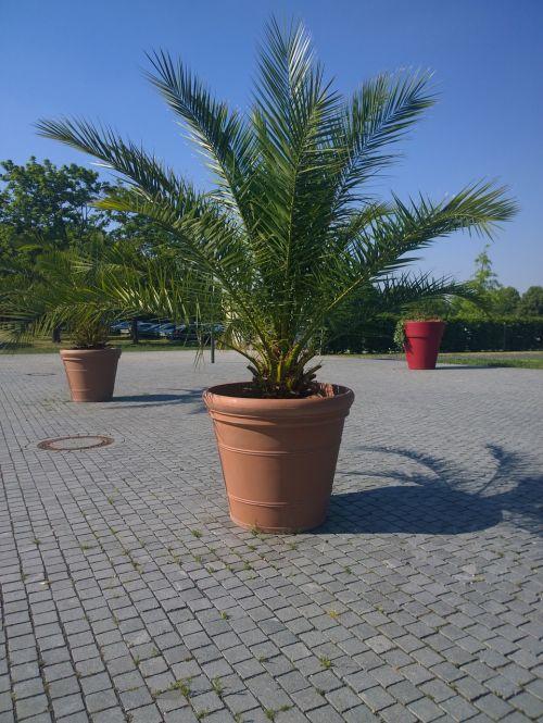 palm plant casting
