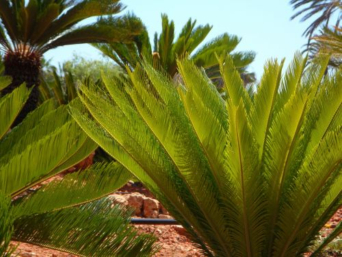 palm fern green lush