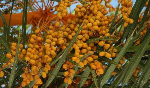palm flower farbenpracht eye catcher