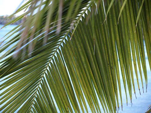 palm fronds james light green