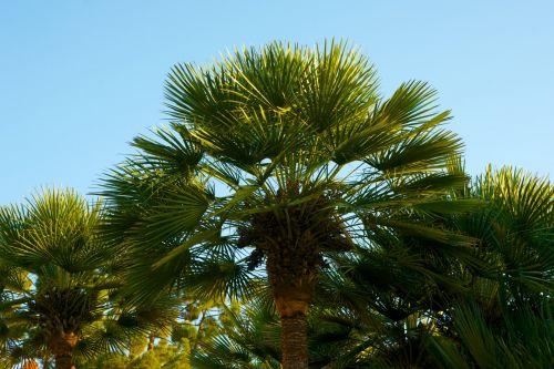Palm Fronds Under Sunset