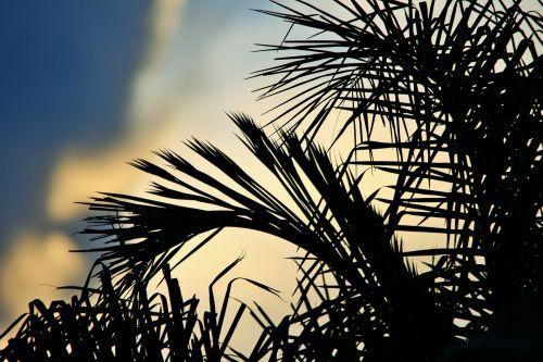 Palm In Moody Sky