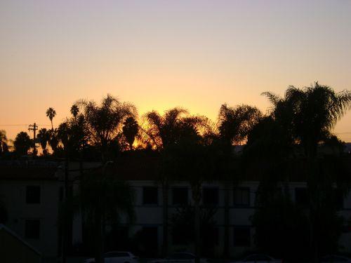 Kalifornija, delnas, saulėlydis, magija, valandą, delno magija