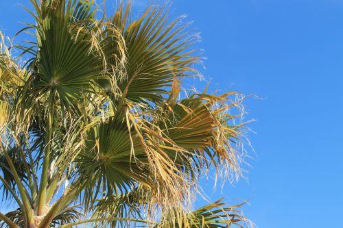 palm springs palm tree desert