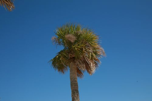 palm tree summer beach