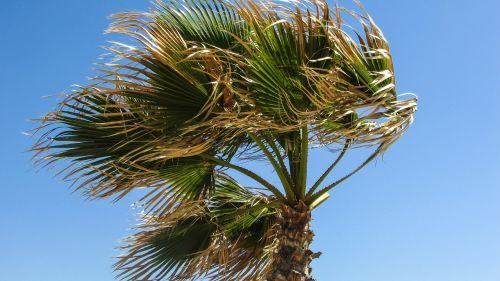 palm tree wind sky