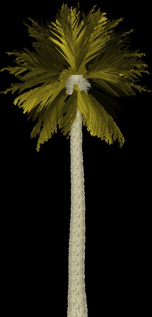 palmė,delnas,medis,atogrąžų,lapai,lapai,palmių medis,žalias,gamta,sala,vasara,rojus,girnas,medis izoliuota,tropikai