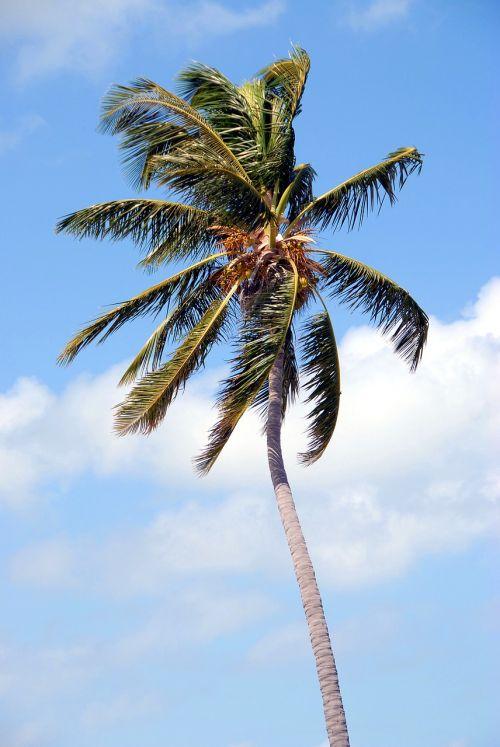 palm tree tropical florida