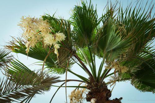 palm tree palm tree