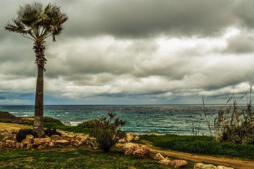 palm tree coast sea