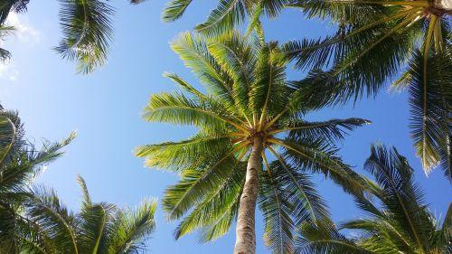 palm tree sky boracay