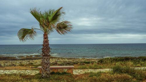 palm tree coastal path sea