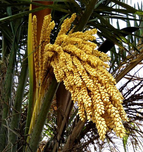 palm tree northeast brazil