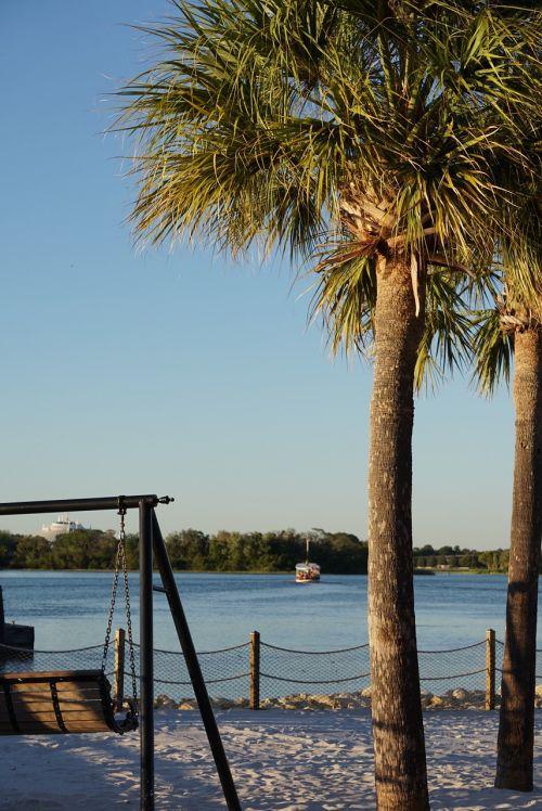palm tree background desktop