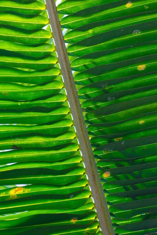 Palm Tree Leaf Pattern
