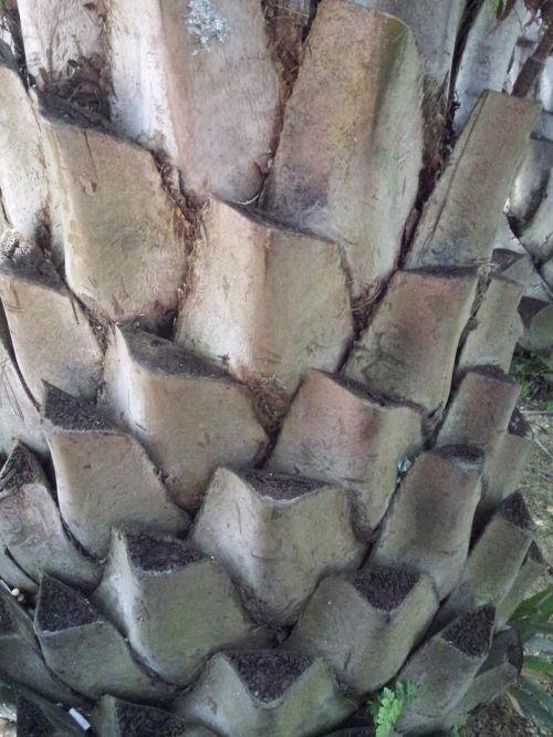 Palm Tree Stem