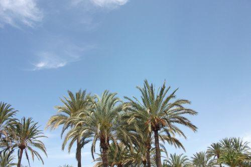 palm trees sun spain
