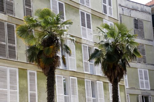 palm trees two togetherness