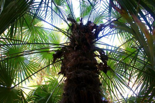 palm trees plant palm leaf