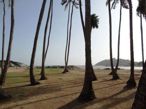 palm trees orla cayenne