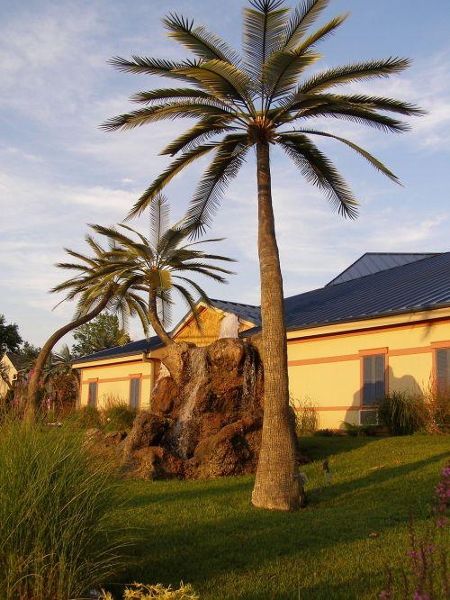 palm trees wildwood inn kentucky