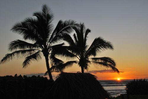 palm trees sunset beach