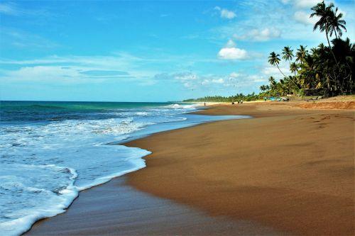 palm trees sand beach