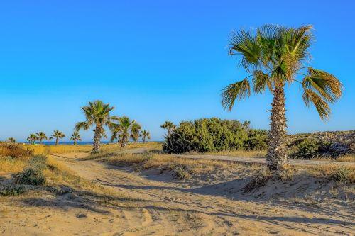 palm trees nature sand